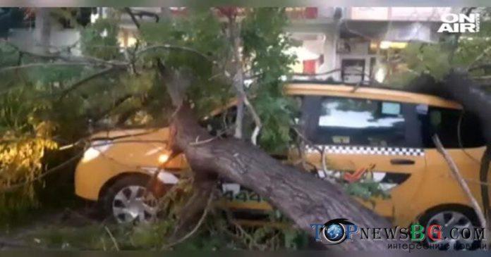 Дърво, коли, училище, Варна